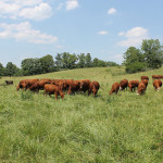 Farm Walk: Green Pastures Farm