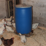 Chicken Mega-Waterer