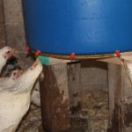 Chicken Mega-Waterer v1.2