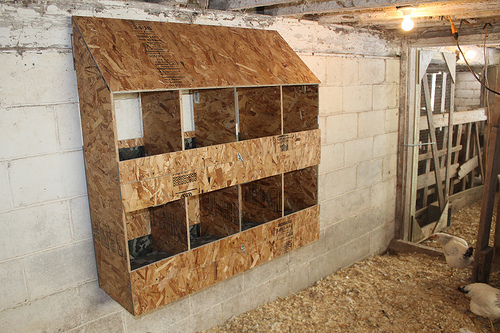 Nestboxes green machine farm for Moving chicken coop plans