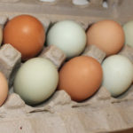 The ebb and flow of eggs, blue or otherwise