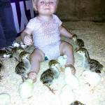 Turkeys, Chicks, and Babies, Oh My!