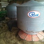 Outdoor Pig Feeders